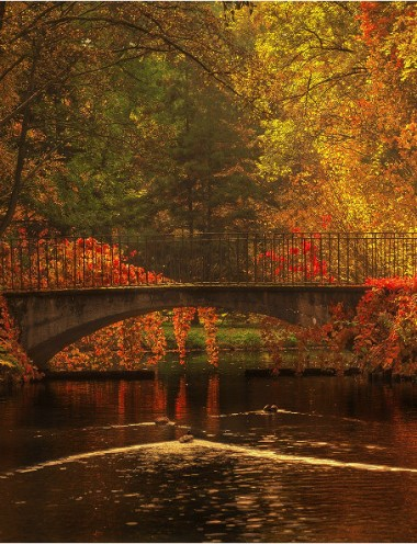 7879514_kolory-jesieni-